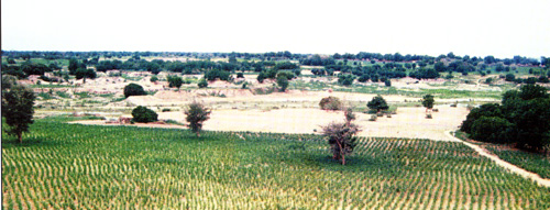 Sahel Savannah with Irrigated Fields
