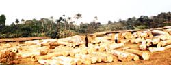 Famous Ayegbami Sawmills, Ijebu Igbo