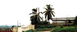 Okikikpukpa Oil Palm Industries, Okikikpukpa