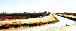 Irrigation Agriculture, Hadejia Valley