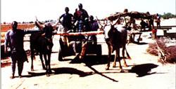 Animal-Drawn Carte for Goods Transportation, Duste