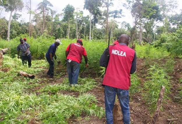 NDLEA refuses to be deterred by officers killing