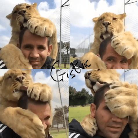 Man Pet Lion Licking His Head As Got Fans Talking (VIDEO)