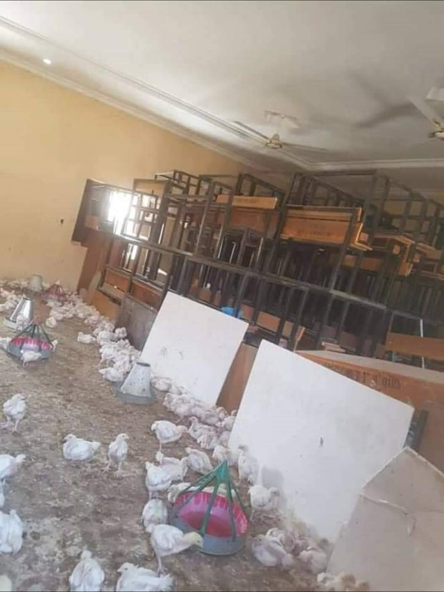 The classroom was converted to a poultry farm in Borno
