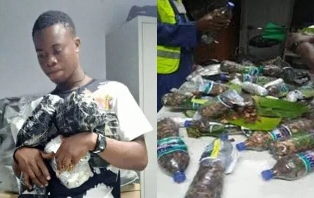 NDLEA Apprehends Cyprus Bound Student With 13.55 kg Of Cannabis In Abuja