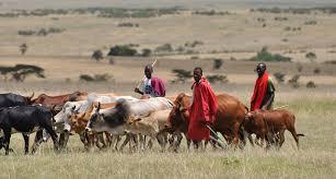 Bayelsa Assembly legislates on bill restricting open grazing by herdsmen