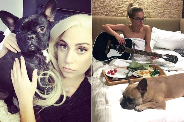 Lady Gaga Offers $500,000 Reward For Her Stolen Dogs After Thieves Shot Her Dog Walker 1