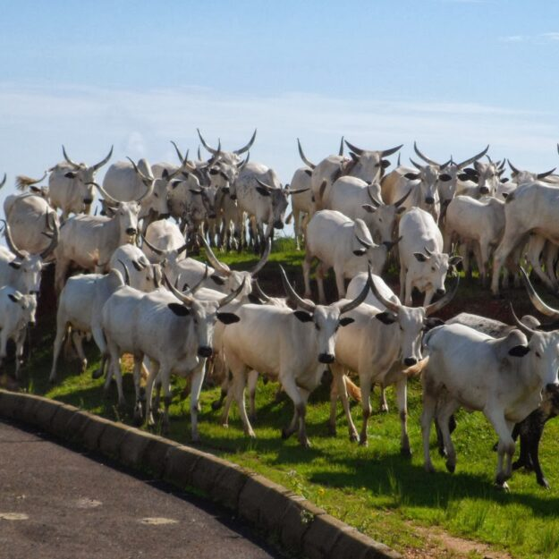 Bayelsa Endorses Ranching, Reads Riot Act to MACBAN and Herders