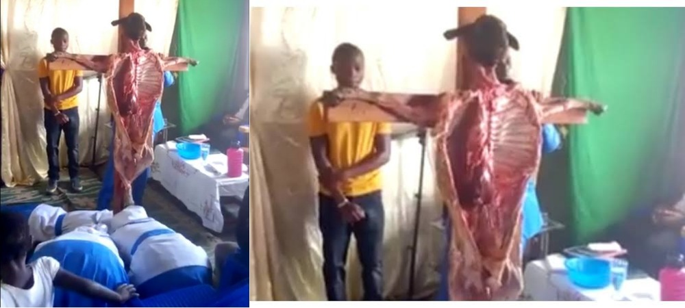 Church Members Seen Praying And Worshipping A Dead Goat Nailed To A Cross [Video] 1