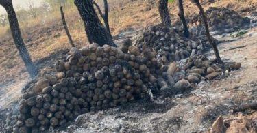Fire destroys over 100 farmers yam farm in Plateau