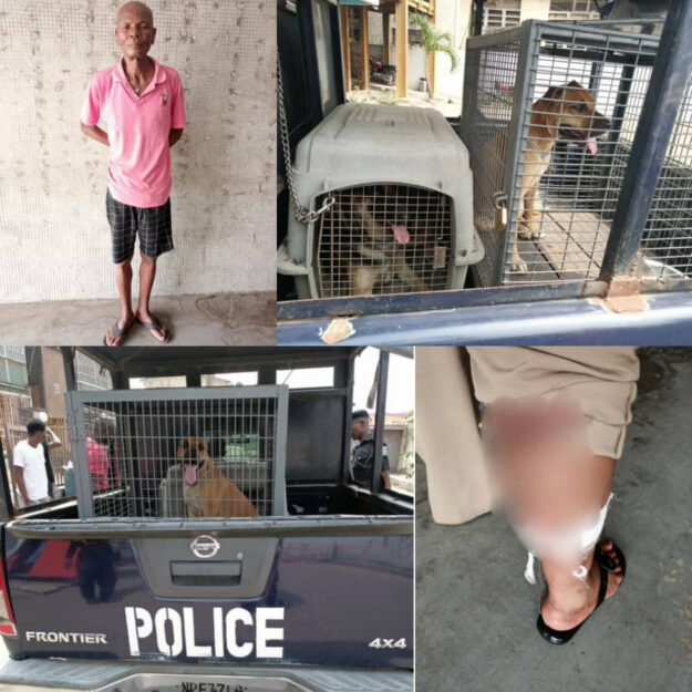 Man In Serious Trouble After Unleashing His Dogs On A Female Police Officer In Lagos (Photos)