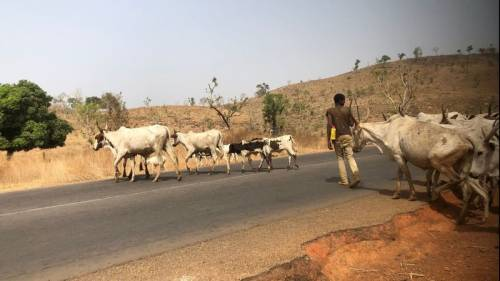 Hunter kills Fulani herdsman in Ondo forest reserve