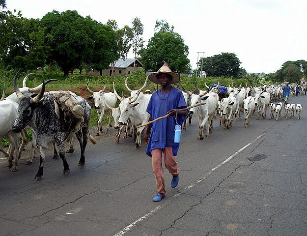 7 Reasons north kicks against 17 southern govs' resolution banning open grazing