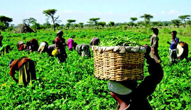 Anchor Borrowers: AFAN says killer herdsmen worst nightmare