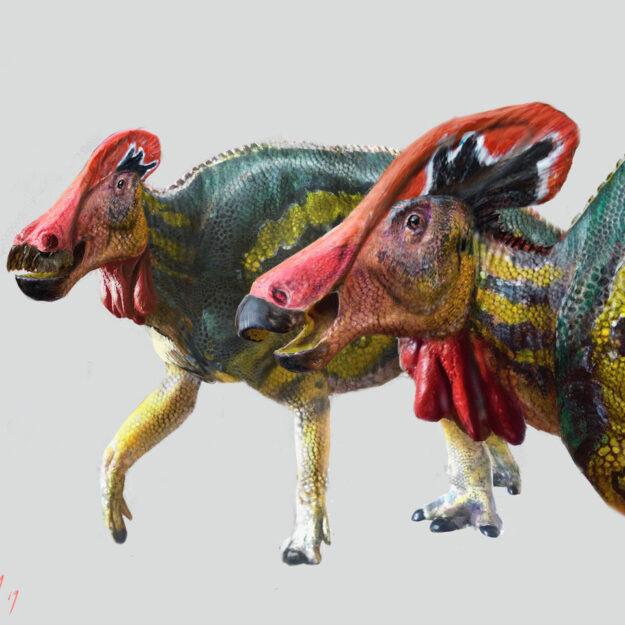Mexican researchers discover new dinosaur species