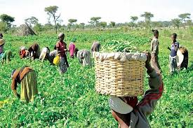 Nigerian farmers raise alarm as insecurity threatens food availability