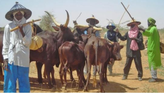 Open Grazing Not Banned In South-East, Our Governors Just Deceiving Us – Ndigbo