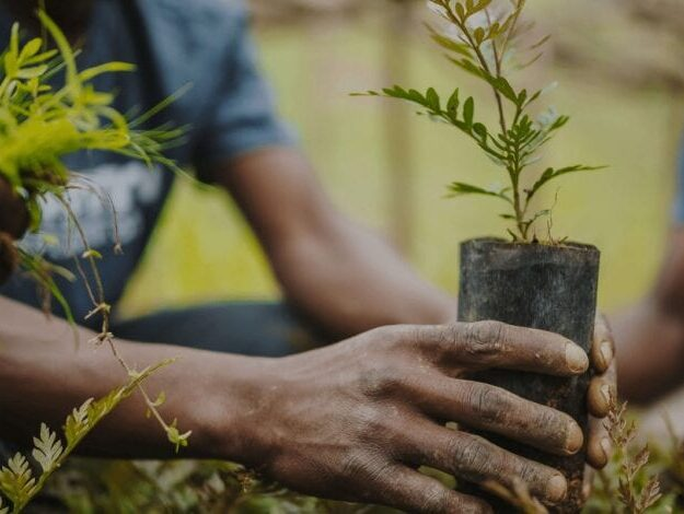 World Environment Day: NCF to plant trees to restore ecosystem in Nigeria