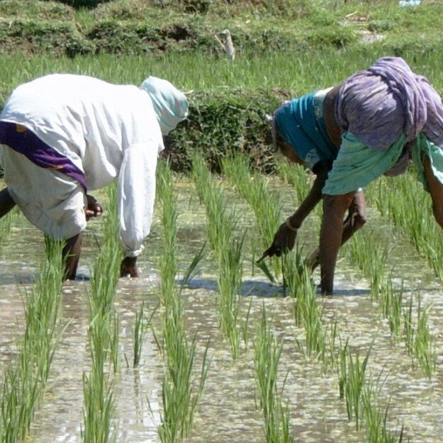 FG distributes inputs to 150 rice farmers in Sokoto