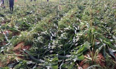 ECWA condemns killings, destruction of farmlands in Plateau