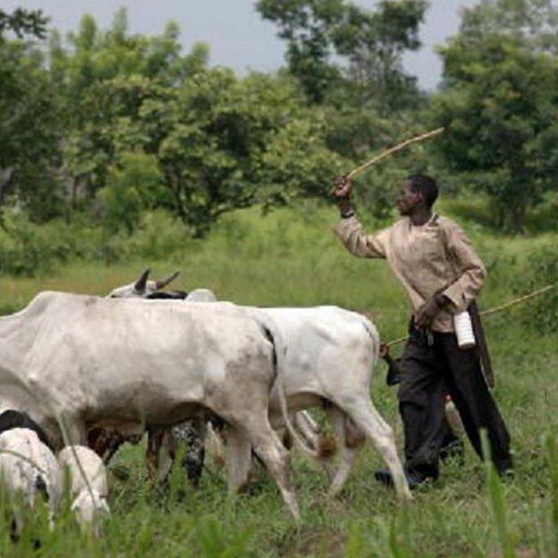Herdsmen Abscond As Cow Kills 2 months old Baby In Delta