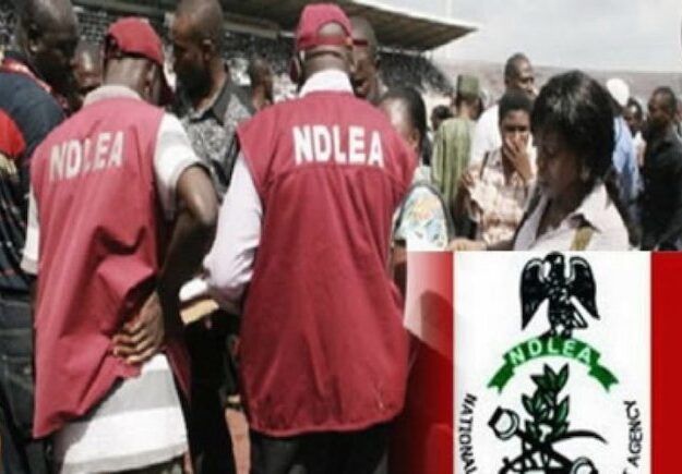 NDLEA arrests woman with 35 wraps of