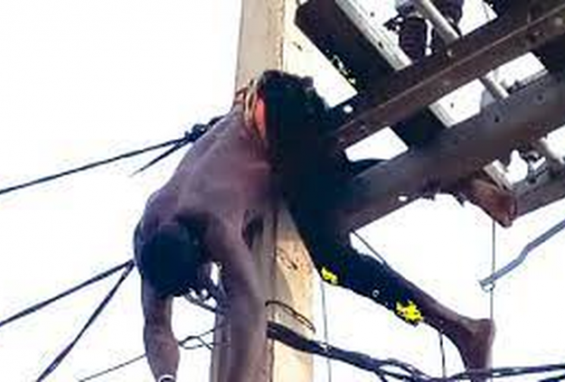 Bobby roasts on high-tension pole; neighbours heave sigh of relief