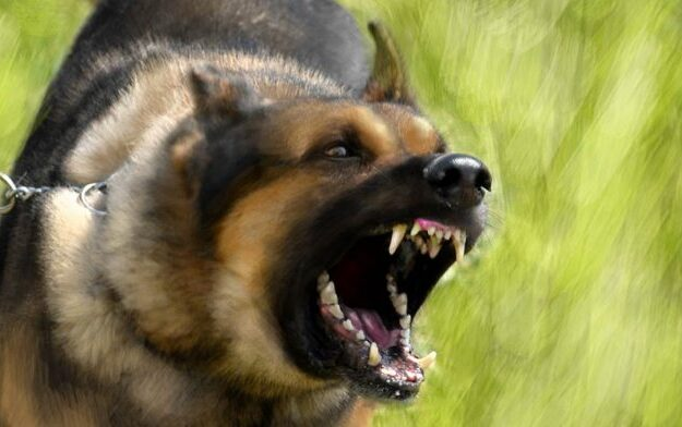 How dogs devoured two-year old baby in Anambra